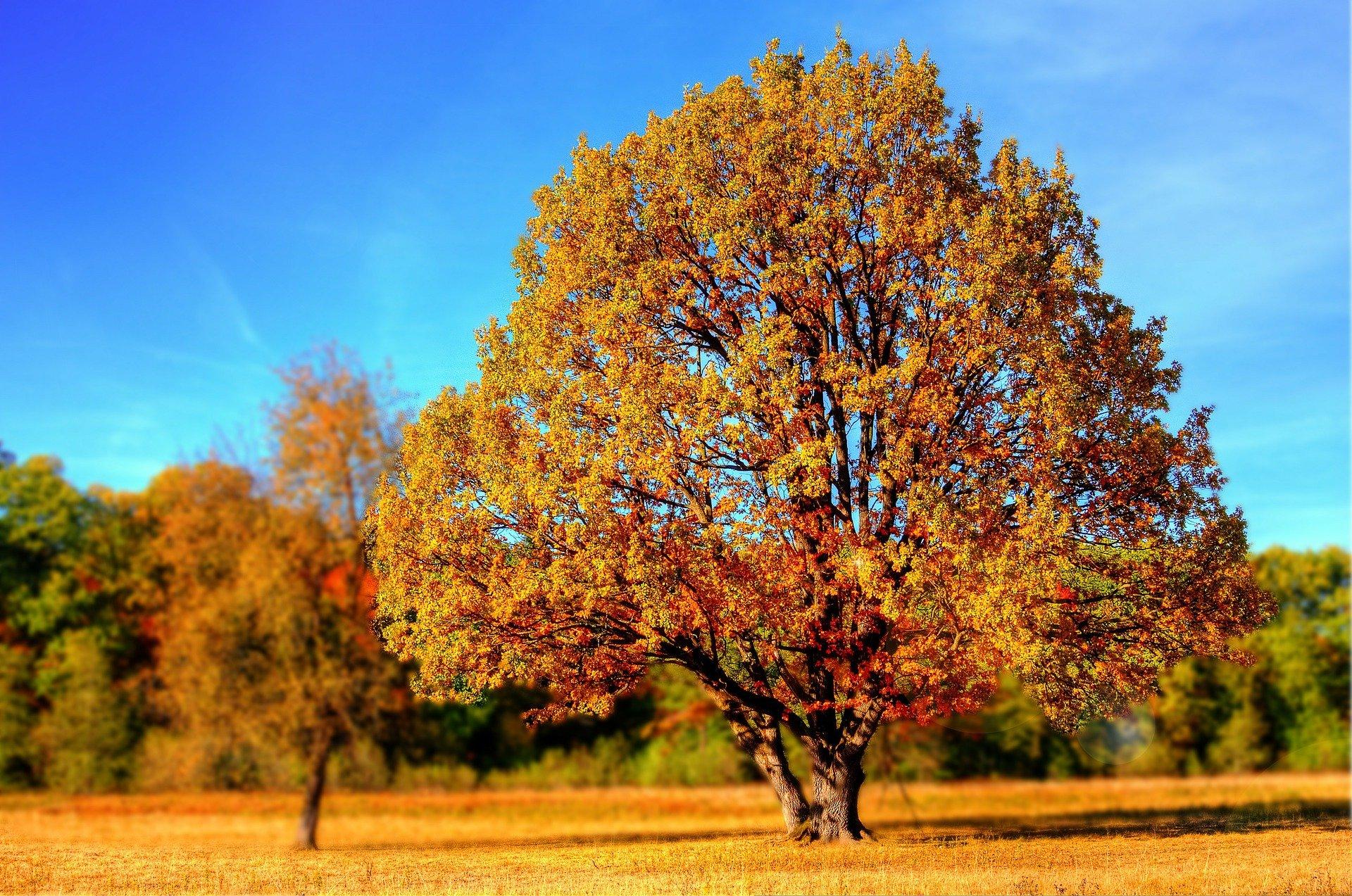 tree-99852_1920